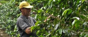 آب-و-هوای-ایده-آل-برای-تولید-قهوه