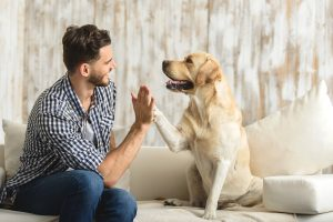 داشتن-سگ-برای-سلامت-قلب-خوب-به-نظر-می-رسد
