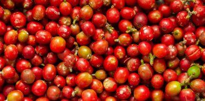 سالوادور-کامبر-،-قهوه-ویژه