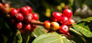 کافه-دو-کنگو-،-داستان-یک-کافه-زیبا
